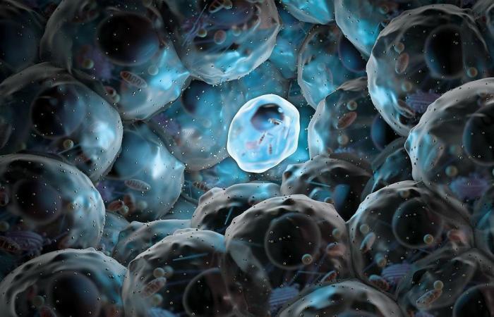 يمكن للخلايا الجذعيّة المأخوذة من الأنسجة العضلية أن تعالج المشاكل الوعائية المترافقة بداء السكّري