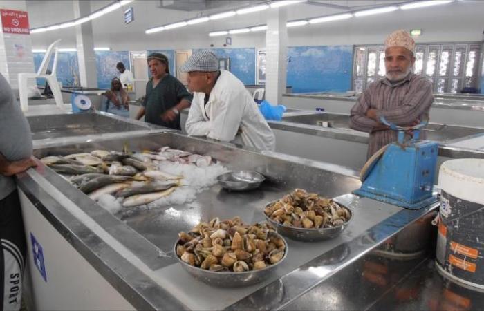 تجارة السمك بالسلطنة.. مهنة تورّث للأجيال