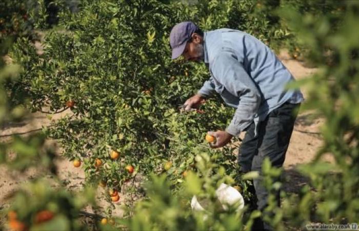 النظام السوري يفرض قيوداً على المزارعين