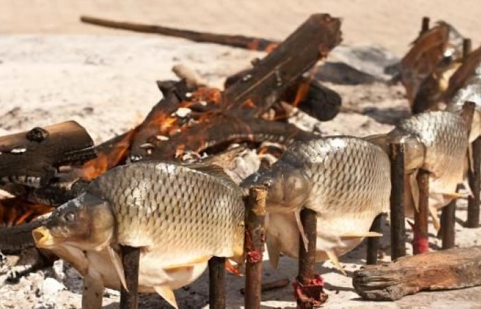 """ماذا تعرف على السمك """"المسكوف"""" العراقي؟"""