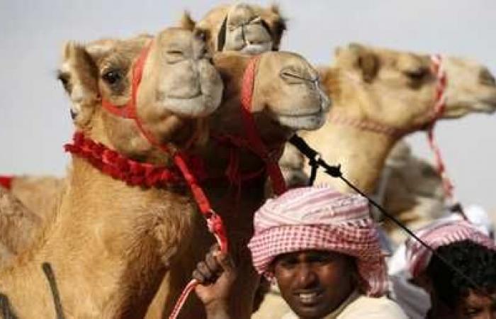دبي تفتتح مستشفى خاصا بالإبل