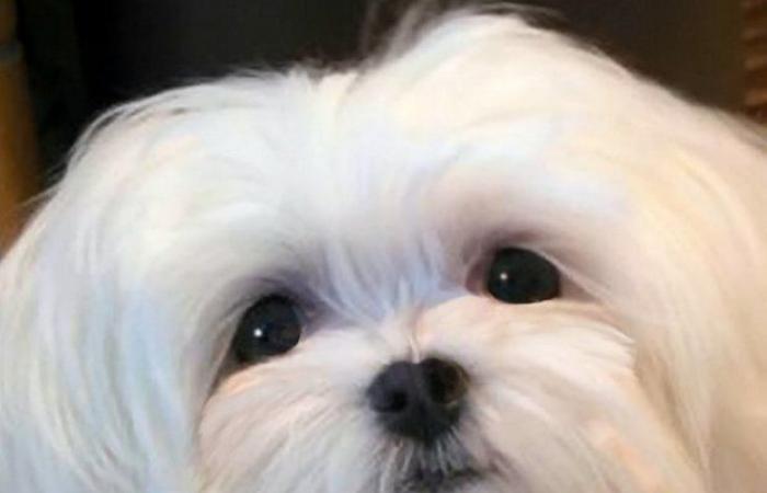 بالصور.. كلبة بعين واحدة رأت ما لم يشاهده الكثيرون!