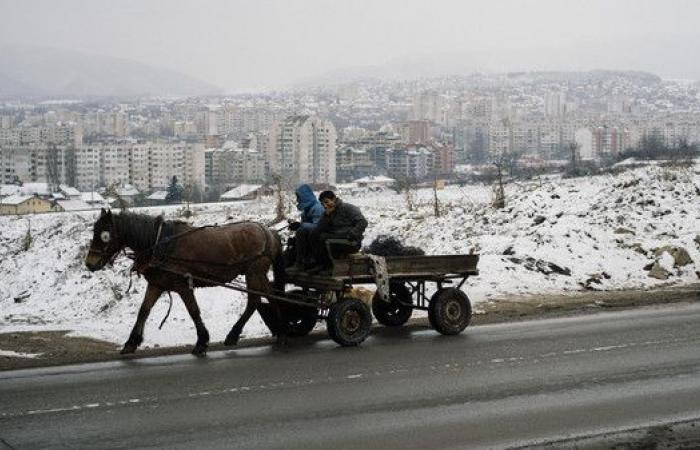 حرب على الخيول في صوفيا.. بسبب الوفود الأوروبية