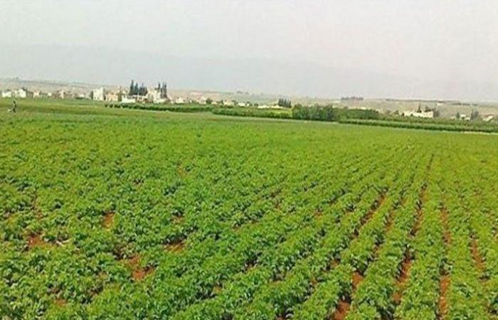 مستوردو وتجار مستلزمات الانتاج الزراعي: تصريح ابو فاعور يفتقر الى الدقة