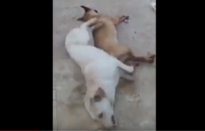 بالفيديو: كلاب تلفظ أنفاسها بعدما تم تسميمها في الغبيري.. والبلدية توضح