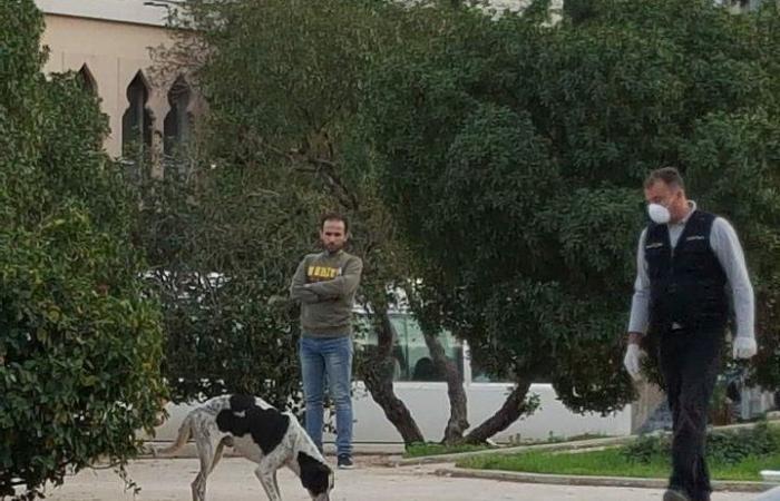 فيديو.. هذه أسرار مذبحة الكلاب في لبنان