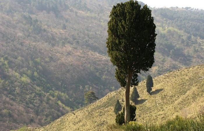 شجرة سرو حالت دون سقوط شابين في واد على طريق جزين