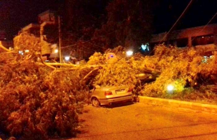 بالصورة: الرياح القوية ادت الى اقتلاع اشجار في زغرتا واهدن