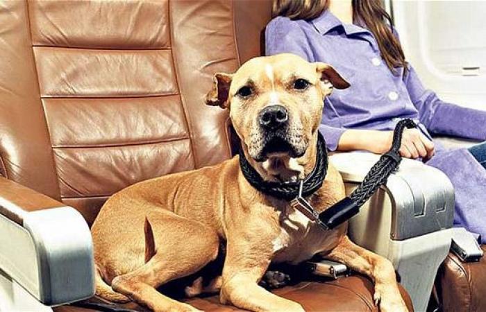 حسن سلوك الحيوانات الأليفة شرط لسفرها بأميركا