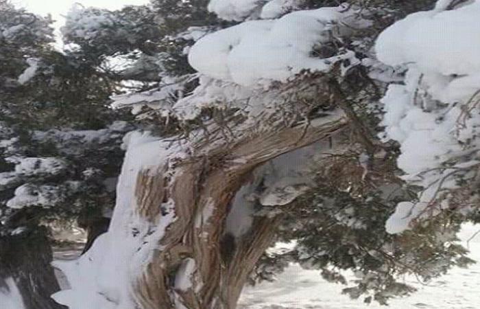 العاصفة الثلجية تتسبب بقطع الكهرباء والطرقات في الهرمل