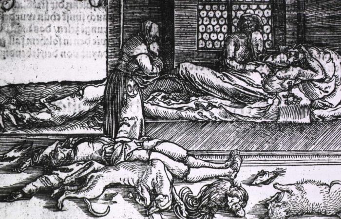 لقد كنا مخطئين باتهام الفئران بنشر مرض الطاعون!