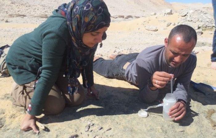شابات مصريات وراء اكتشاف ديناصور عمره 80 مليون سنة