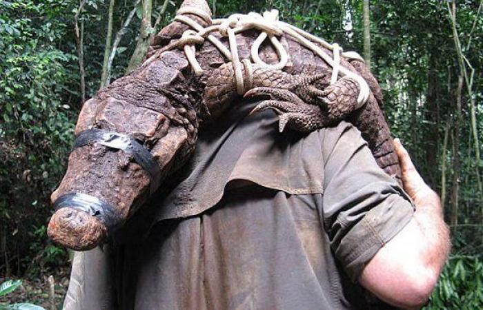 تماسيح إفريقية تُكتشف للمرّة الأولى