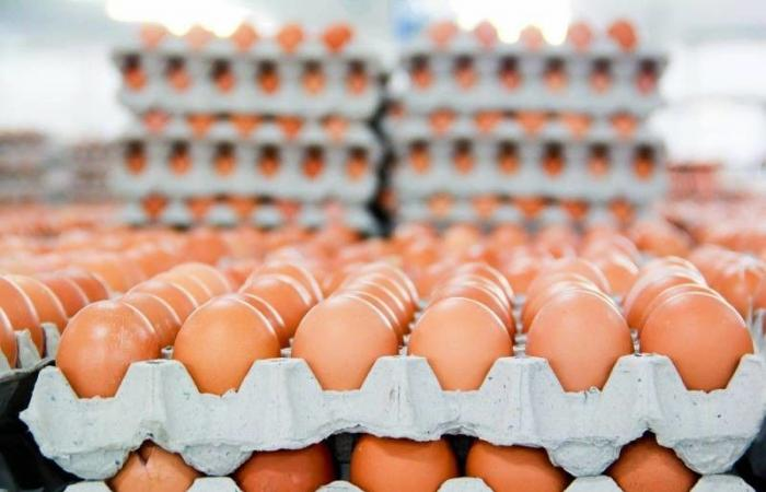 أزمة رياضية بسبب 15 ألف بيضة!