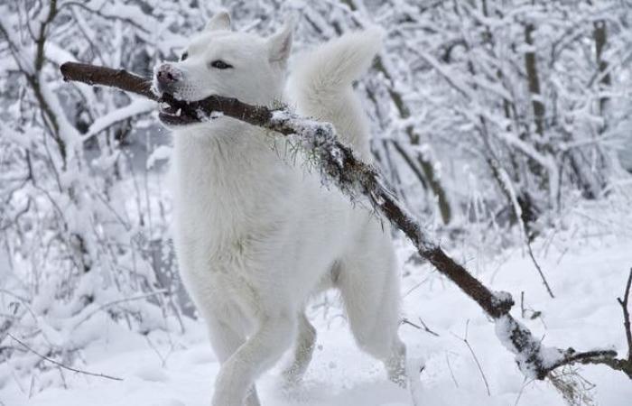 طقس ماطر وبارد وثلوج متفرّقة.. هذا ما سيفعله المنخفض الجوي بالأيام!