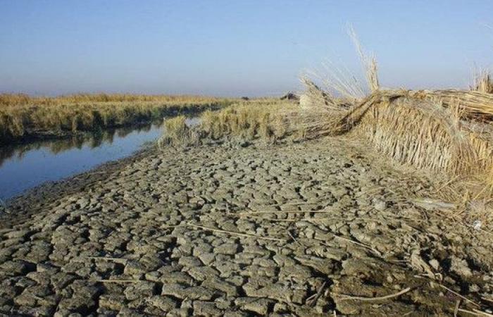 أزمة المياه ستطيح بأهوار العراق من لائحة التراث العالمي