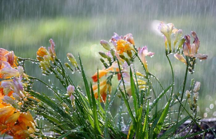 """شباط سيودعنا بالأمطار.. ولكن آذار """"الغدّار"""" بدايته حارّة!"""