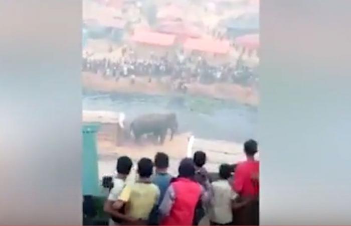 بالفيديو… فيل هائج يهاجم الناس