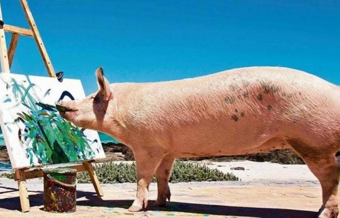 بالفيديو… الخنزيرة الرسامة ولوحاتها بـ 1700 يورو!