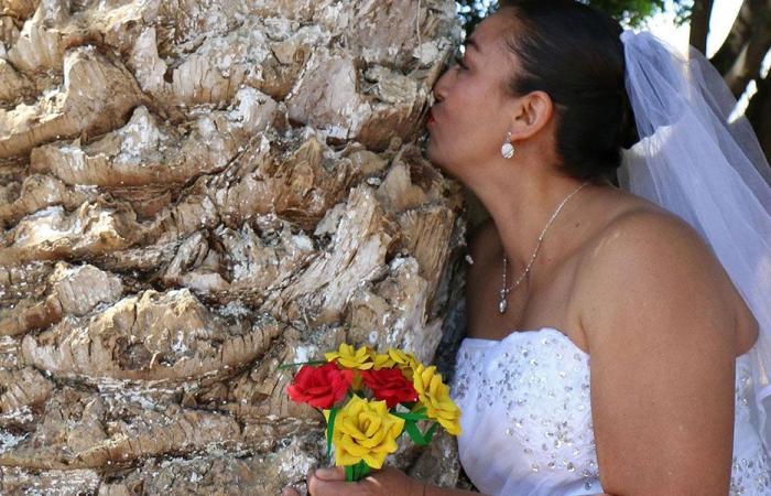 بالفيديو… نساء يتزوجن الأشجار!