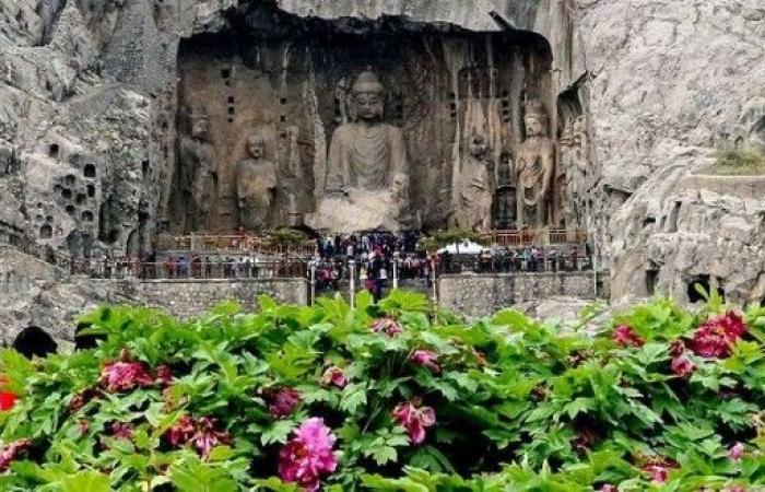 الصين تستنسخ زهرة الفاوانيا!