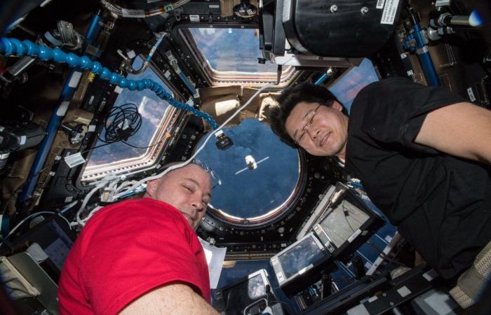 يوجد حاليًا الكثير من الحيوانات المنوية على متن محطة الفضاء الدولية