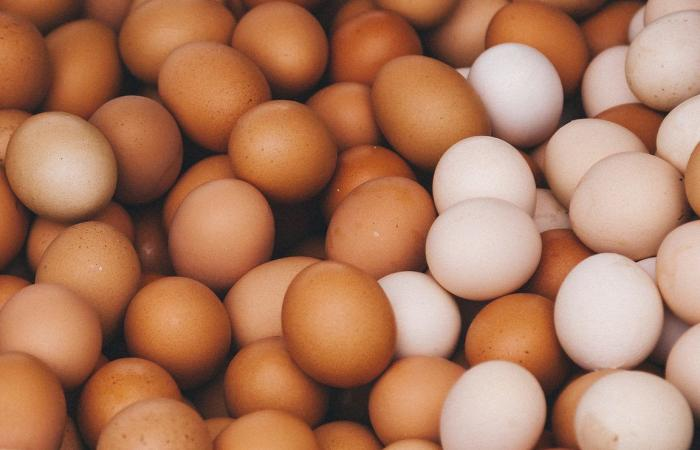سحب 200 مليون بيضة من السوق بسبب السلمونيلا!