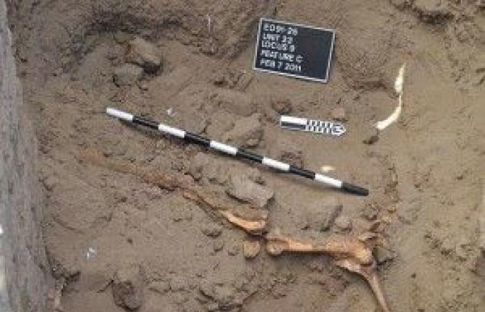 بالصور.. العثور على رفات حصان مصري عمره 3000 عام في السودان !