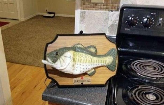 بالفيديو.. سمكة تنفذ الأوامر!