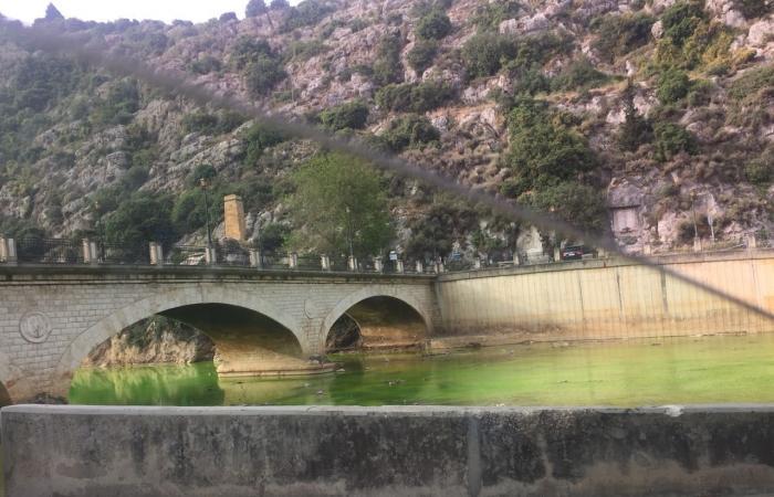 بالصور… من ينشر السموم في نهر الكلب؟