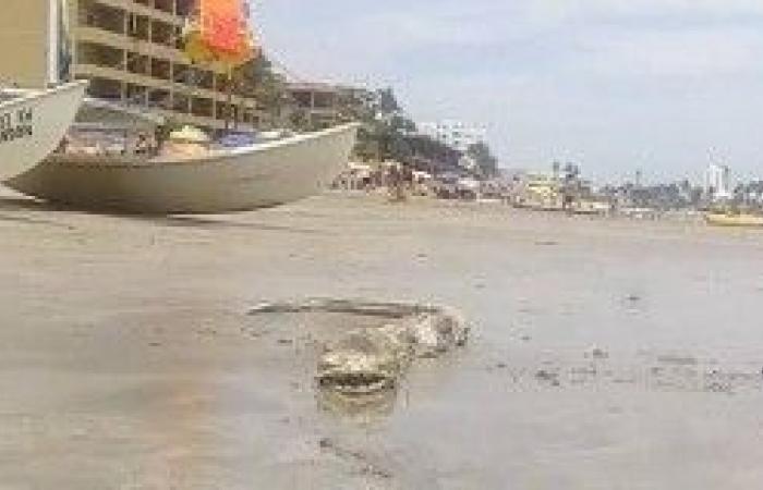 بالصور.. العثور على حيوان بحري مخيف قبال سواحل المكسيك!