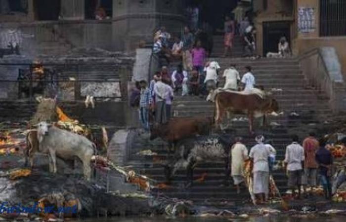الهند.. وفاة رجل ضرباً بسبب بقرة!