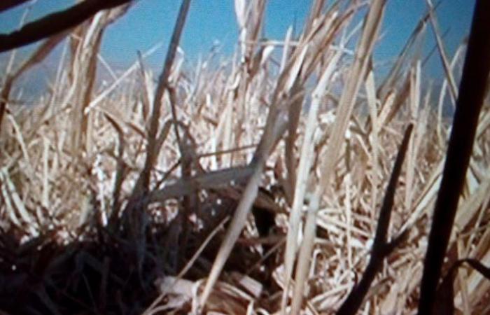 وقفة إحتجاجية لمزارعي القمح في إيعات للمطالبة بتعويضعهم مواسم الحبوب جراء الجفاف