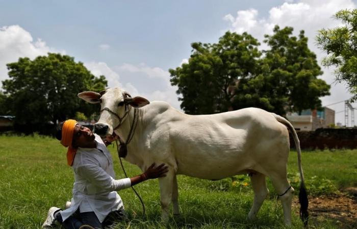 """بتهمة انتهاك """"قدسية"""" البقر.. هندوس يضربون مسلما حتى الموت"""