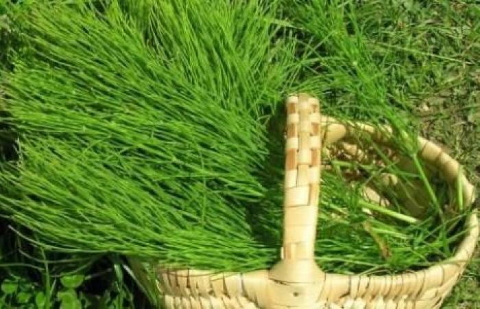 أعشاب تساعد على الحمل بعد الأربعين