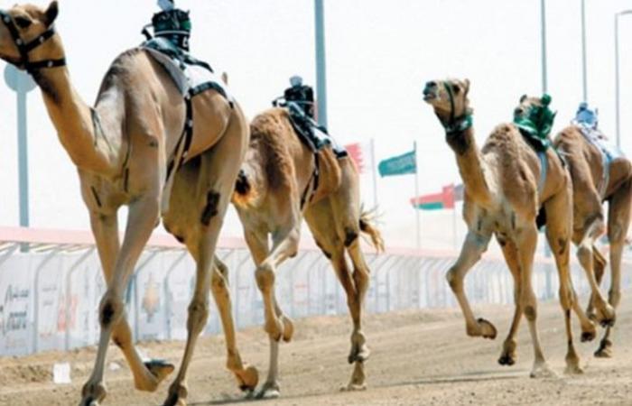 "مهرجان ابن سلمان لسباق الإبل يدخل ""غينيس"" (شاهد)"