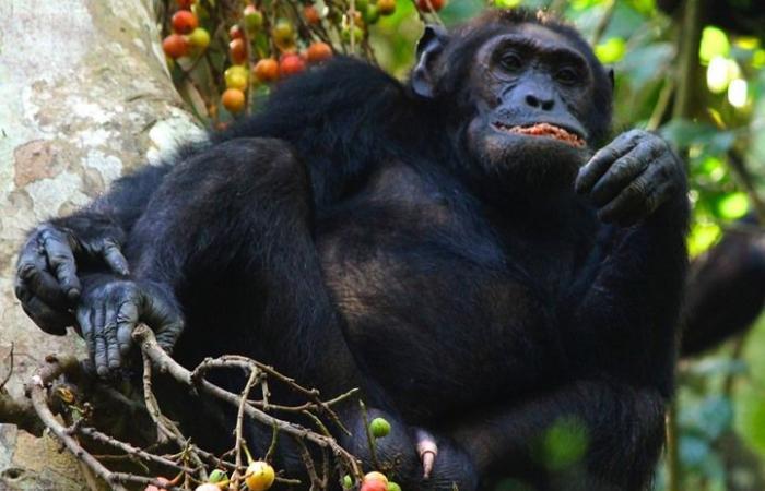أبحاث جديدة تكشف: ثمار النباتات تتحدث إلى الحيوانات لأكلها