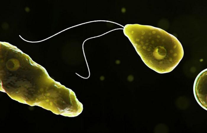 موت رجل في نيوجيرسي بسبب أميبا آكلة لخلايا الدماغ