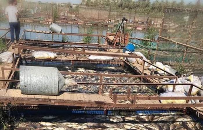 العراق | بالصور.. نفوق آلاف الأسماك في محافظة بابل العراقية