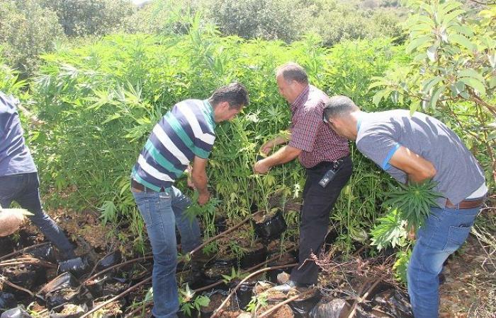 فلسطين   الشرطة تضبط أكثر من نصف كيلو من المخدرات ببيت لحم