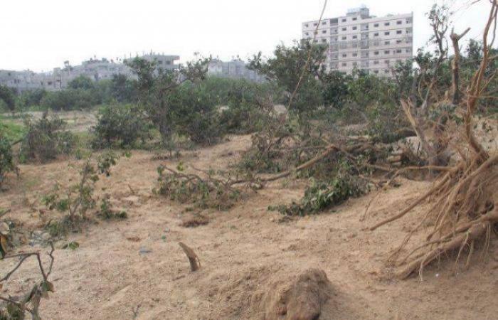 """فلسطين   سلطة الأراضي في غزة تصدر """"تحذير هام"""" بشأن البيع والشراء"""