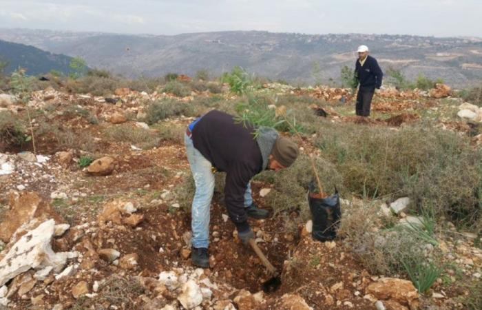 في جبل عامل.. محمية جديدة لرعاية النحل