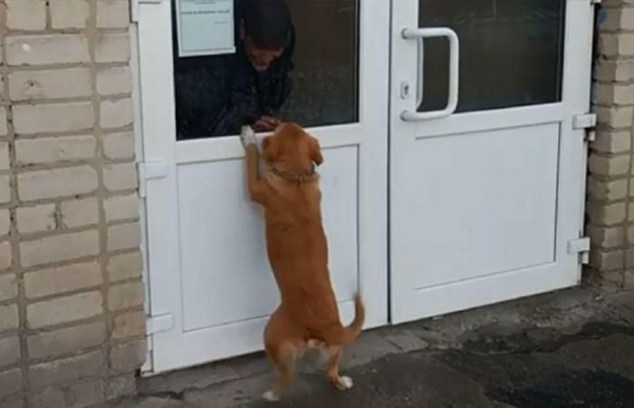 بالفيديو: كلب ينتظر صاحبه لأسابيع عند باب المستشفى