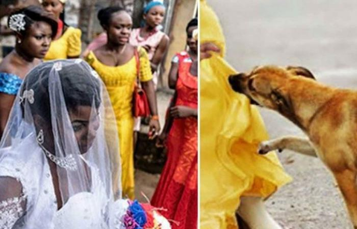 """""""كلب بطل"""" أنقذ العشرات من انتحارية في نيجيريا"""