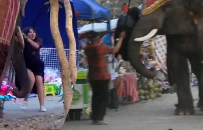 فتاة تنجو بأعجوبة من فيل غاضب (فيديو)