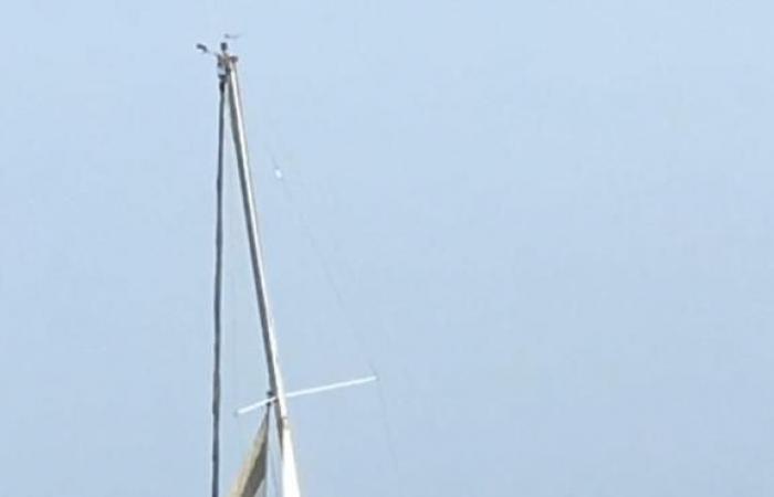 الخليح   البحرية السعودية تنقذ بحاراً فرنسياً على قارب شراعي