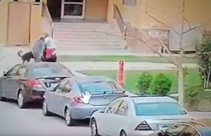 مصر   فيديو مؤلم.. كلبان يفترسان طفلاً مصرياً بوحشية