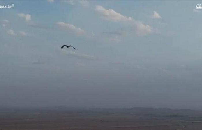 """الخليح   درون """"تصطاد"""" العُقاب فوق جبل طويق"""