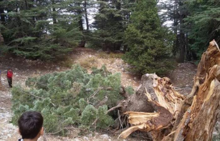 """""""بترونيات"""": سنتصدى بقوة لأي مخالفة لقانون الغابات"""