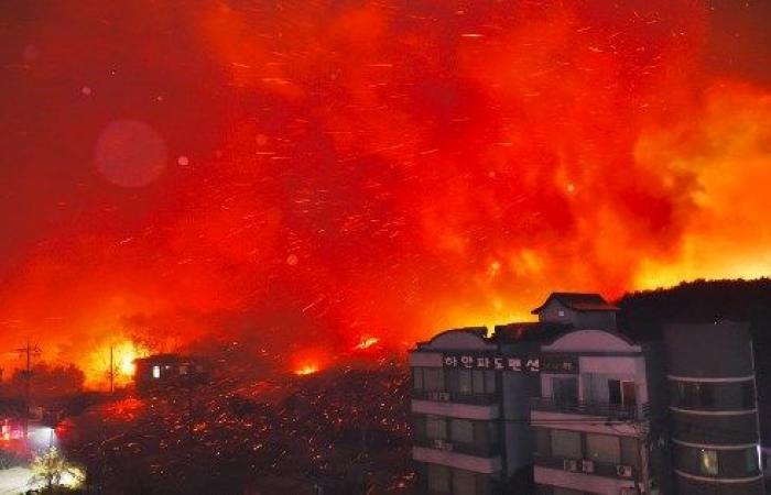 حرائق غابات هائلة في كوريا الجنوبية